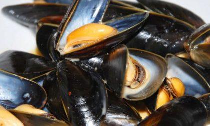 Cozze spagnole contaminate da salmonella: allarme in Italia