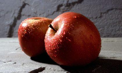 Le mele di Cuneo famose per il colore rosso brillante della buccia