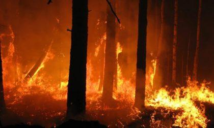 Massima pericolosità per gli incendi boschivi in Piemonte