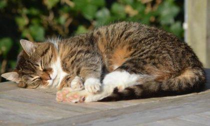 Lite per il gatto finisce con l'arresto per droga