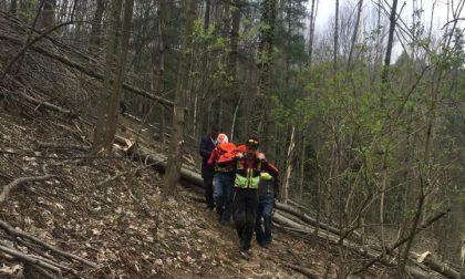 Venasca, boscaiolo muore travolto da un albero