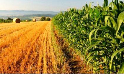 La Dichiarazione delle Nazioni Unite per i diritti dei contadini, appuntamento a Mondovì