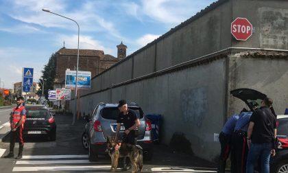 Cani antidroga per le vie di Saluzzo: giovanissimi segnalati