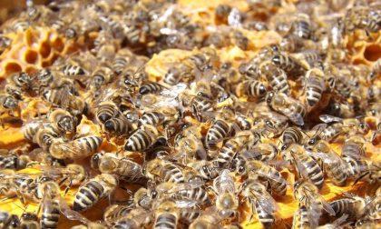 Il caldo aumenta, ma quanto soffrono le api?