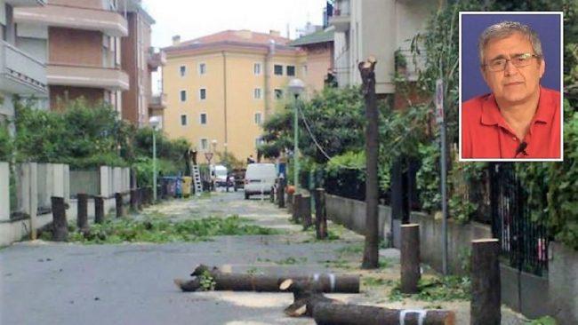 Stragi di alberi per far passare il 5G? Segnalati casi anche in zona   VIDEO