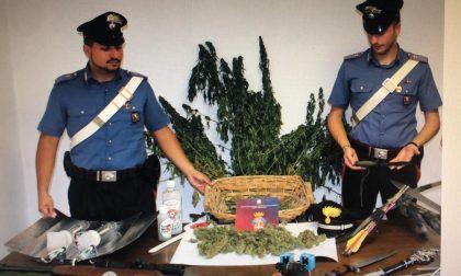 Autotrasportatore  a Moretta coltivava e vendeva droga, arrestato