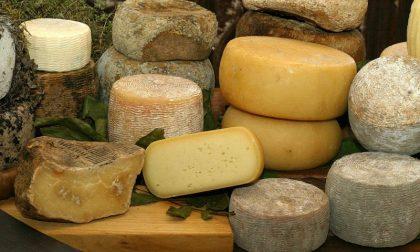 Fine settimana nel salotto del formaggio di Alba