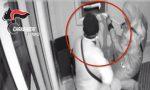 Arrestata la banda dei nonni rapinatori: assaltavano i bancomat, anche nel Cuneese | FOTO e VIDEO