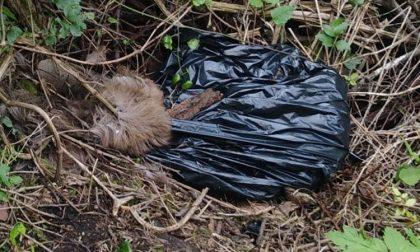 Animali morti chiusi in un sacco