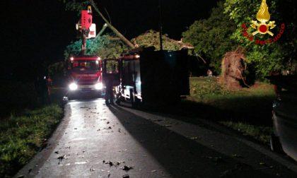 Albero cade in mezzo alla strada, intervento dei Vigili del fuoco | FOTO
