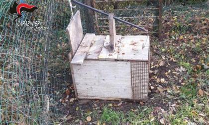 Usavano trappole e lacci per catturare gli animali selvatici