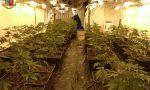 Casa diroccata era una serra di marijuana: 45 chili sequestrati e due arresti