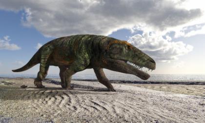 Val Maira, scoperta l'impronta di un grande rettile vissuto 250 milioni di anni fa