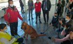 Cani anti-Covid, al Cuneo Airport parte il progetto pilota
