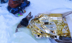 Cerva gravemente ferita: intervento congiunto per salvarla, ma non ce l'ha fatta