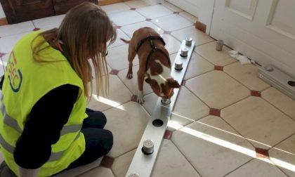 Cani anti-Covid, all'aeroporto di Cuneo partirà il progetto pilota