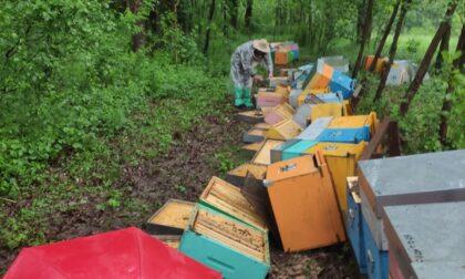Intera attività di un apicoltore cuneese distrutta dai vandali, in 24 ore raccolti 44mila euro per aiutarlo