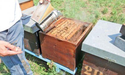 Giornata mondiale dell'ape, il clima impazzito mette a rischio la produzione del miele