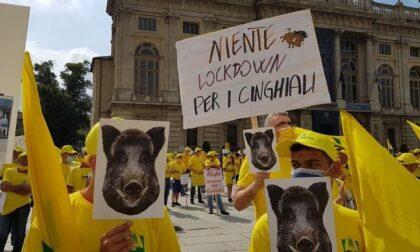 """Coldiretti Cuneo: """"Un incidente ogni 48 ore è causato dai cinghiali"""""""