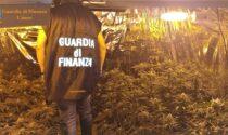 Posta sotto sequestro una delle serre di marijuana più grandi della provincia di Cuneo